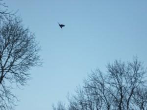 treesbird